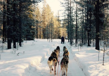 Lapland Bucket List: My Top 10 Things to Do